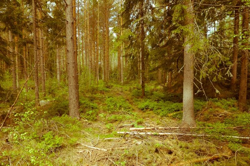 Original source: https://upload.wikimedia.org/wikipedia/commons/3/36/A_walk_in_the_woods_%289162109840%29.jpg