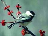 Get to know Maine's Winter Birds