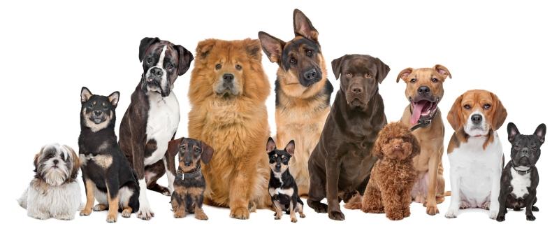 Original source: https://3elydn392n5m3p35uv1mwipek8n-wpengine.netdna-ssl.com/wp-content/uploads/2015/10/group-of-dogs.jpg