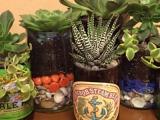 Beer Glass Succulent Garden