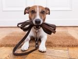 Dog Training Basics Messalonskee W19