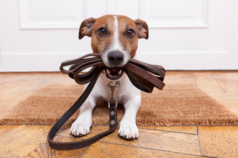 Dog Training Education