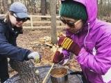 Mushroom Cultivation: Three Ways to Grow Gourmet Mushrooms at Home