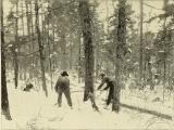 Woodlot Management, A Beginner's Course