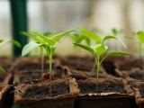 'STEM' in the Garden