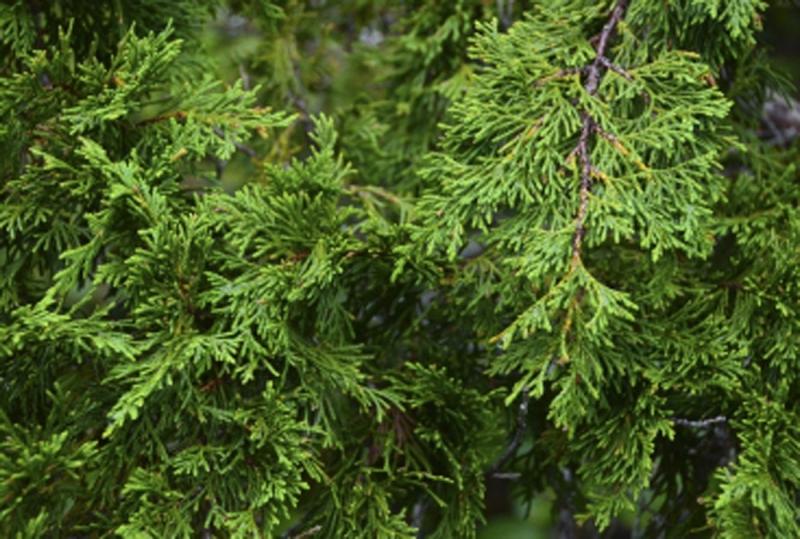 Original source: http://www.centralcoastbiodiversity.org/uploads/1/4/9/9/14993002/3616952_orig.jpg?619