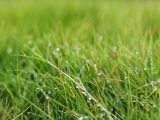 Organic Land/Lawn Care - Litchfield