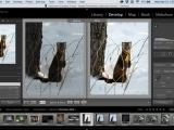 Online Class: Introduction to Adobe Lightroom Classic
