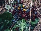 Foraging Wild Food