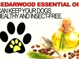 PETS & ESSENTIALS OILS