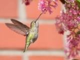 Bird-Friendly Backyards (Online)