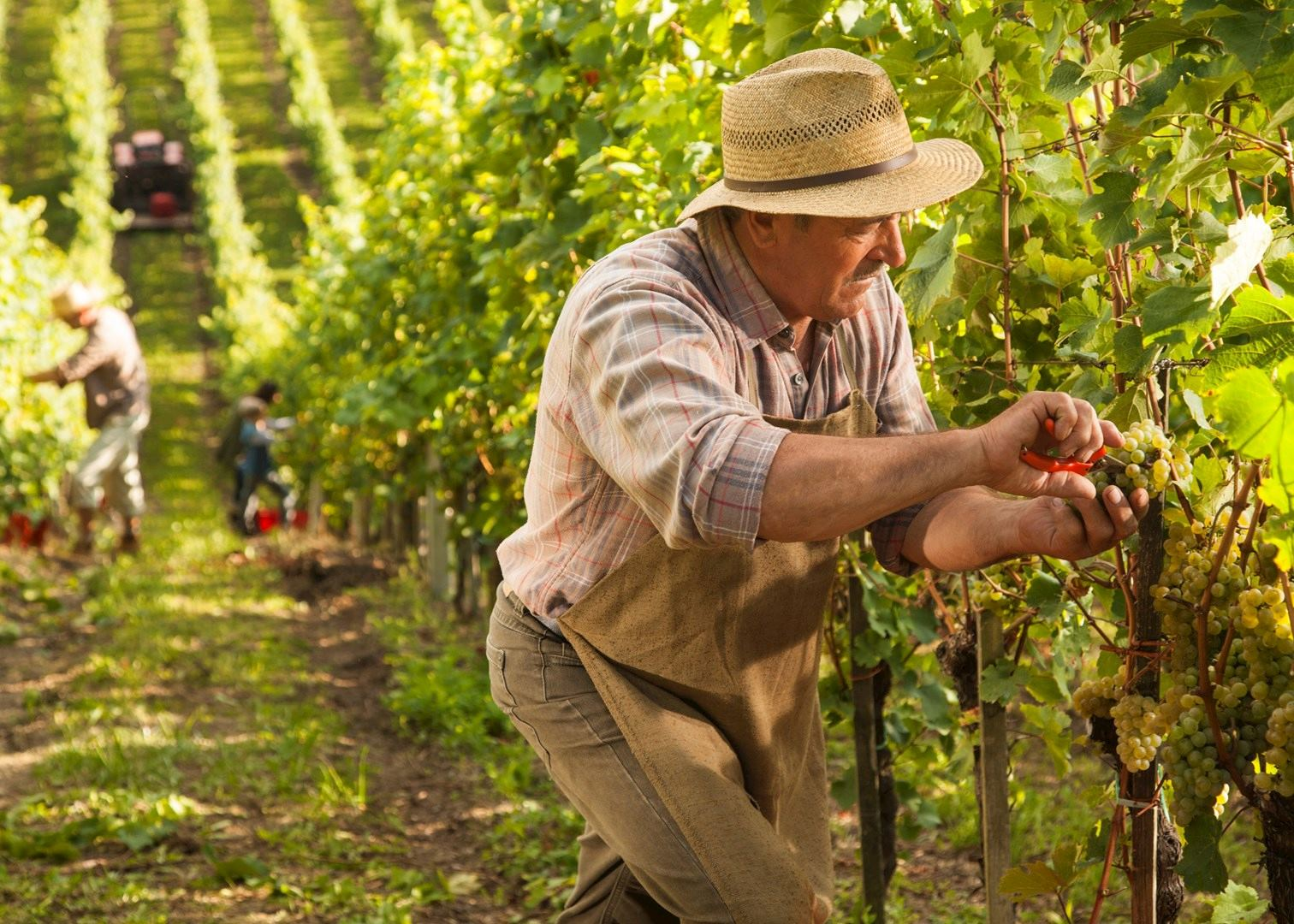 Tour the Wines of the Loire Valley