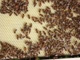 Beginner Beekeeping