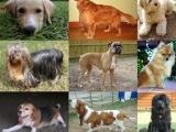 Dog Body Language- Speaking Dog