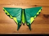 Origami Butterflies (in person) Litchfield