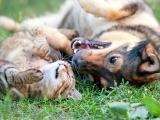 Essential Oils - Pets