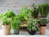 Herbal Basics - Hampden