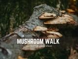Mushroom Walk: Session II