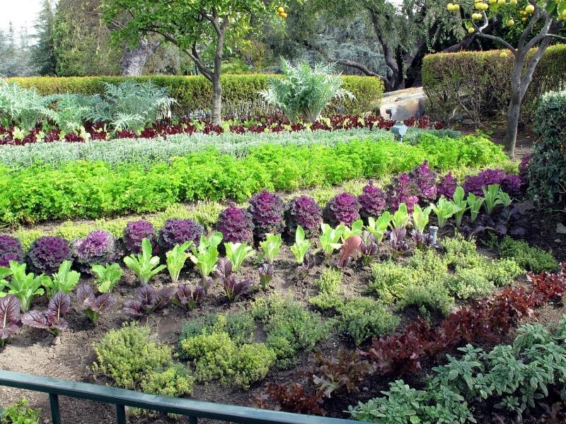 Original source: https://upload.wikimedia.org/wikipedia/commons/thumb/2/24/Edible_garden_at_Pixie_Hollow.jpg/1280px-Edible_garden_at_Pixie_Hollow.jpg