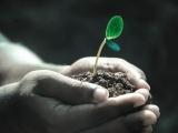 Gardening: Grow Your Own Organic Garden