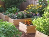 405S20 Raised Bed and Container Gardening