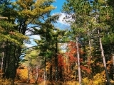 Nature Writing for Women: Honor Autumn: Live Online