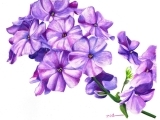 Watercolor Pencil for Beginners - Online