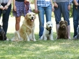 Intermediate Dog Obedience
