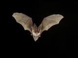 Spooky Felt Bats