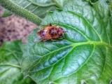 Gardening/Entomology