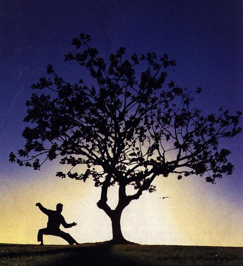 Original source: http://villaris-ri.com/wp-content/uploads/2011/11/Tai-CHi-TREE.jpg