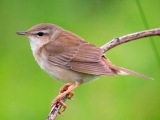 Spring Migration Sampler