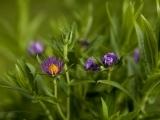 Native Plant Walk:  Rachel Carson Wildlife Refuge