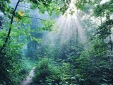 The Science of Forest Bathing