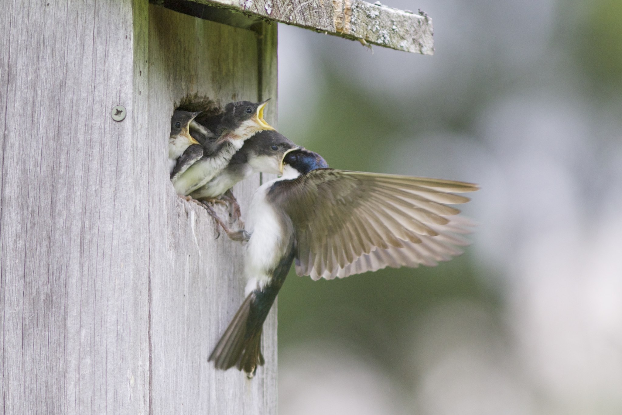 Maine Bird Atlas Training