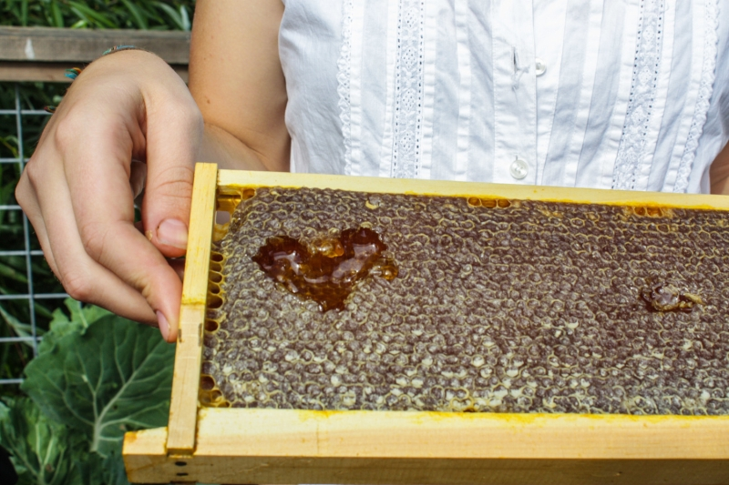 Original source: https://static1.squarespace.com/static/54ad6706e4b0f3612b2c6a53/t/54bea0d1e4b0bf25db995603/1421779158455/Planet+Bee+Backyard+Beekeeper+with+Honey+Heart.jpg?format=1500w