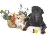 Essential Oils for Pet Health