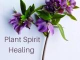 Plant Spirit & Energy Work