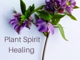 Plant Spirit & Energy Work