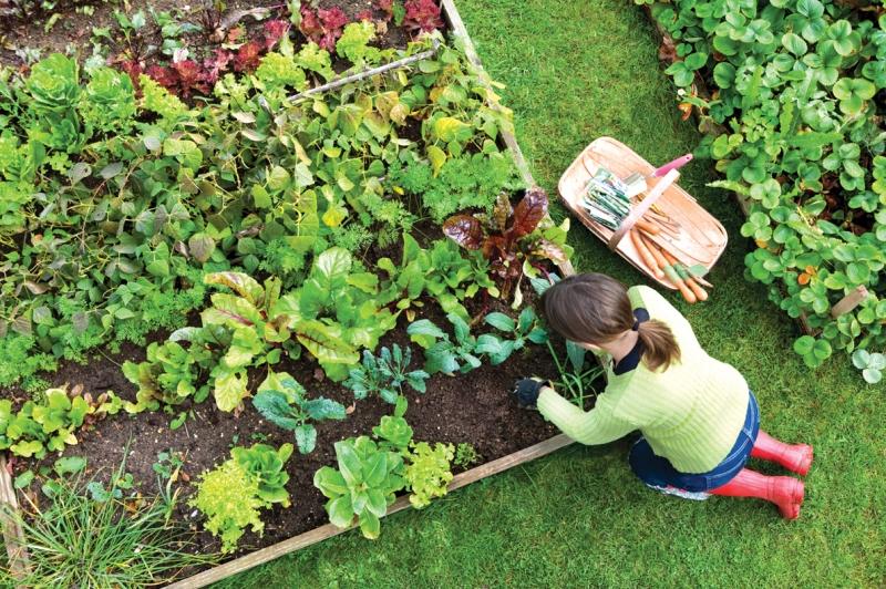 Original source: http://nehomelife.com/wp-content/uploads/2015/04/Vegetable-Gardening-Tips-for-Beginners.jpg