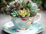 Teacup Mini Succulent Garden
