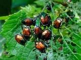 Pest Management for the Home Gardener