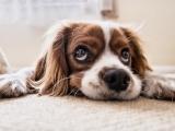 Dog Training: Manners I Section B