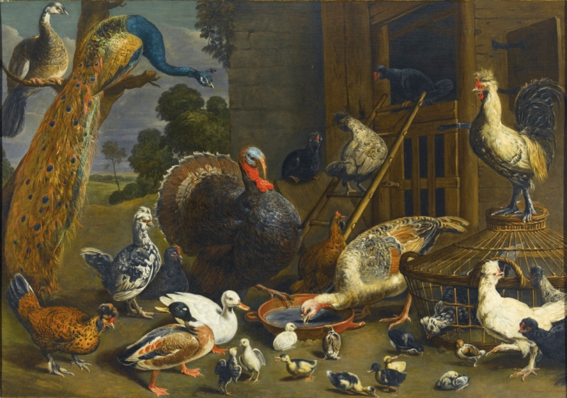 Original source: https://upload.wikimedia.org/wikipedia/commons/4/47/Adriaen_van_Utrecht_-_Variety_of_birds_including_a_peacock%2C_turkey%2C_chickens%2C_and_ducks_with_their_young_drinking%2C_playing_and_pecking_about_in_a_yard.jpg