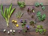 E2106 - Edible Wild Plants
