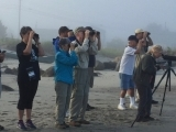 Bird Walks at Scarborough Marsh