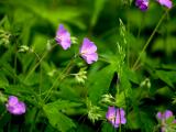 Nature Journaling - Wildflowers