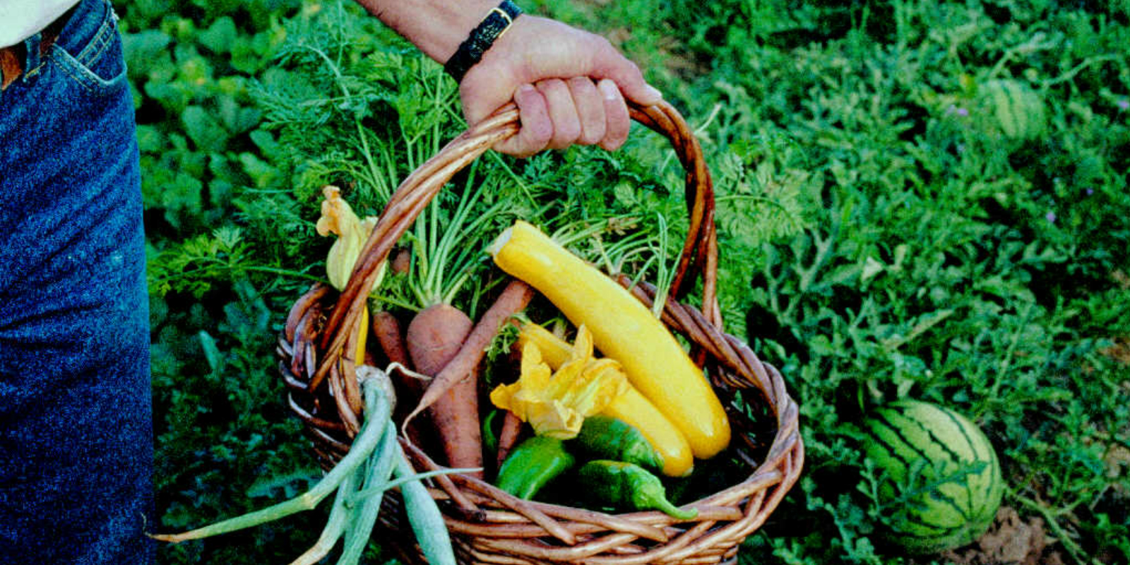 Grow Your Own Organic Garden! Sponsored by MOFGA