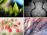 Beginner Photography 1 (Online Class)