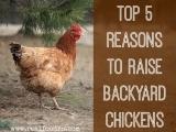 Original source: http://cdn.realfoodrn.com/wp-content/uploads/2014/02/raise-backyard-chickens.jpg.jpg